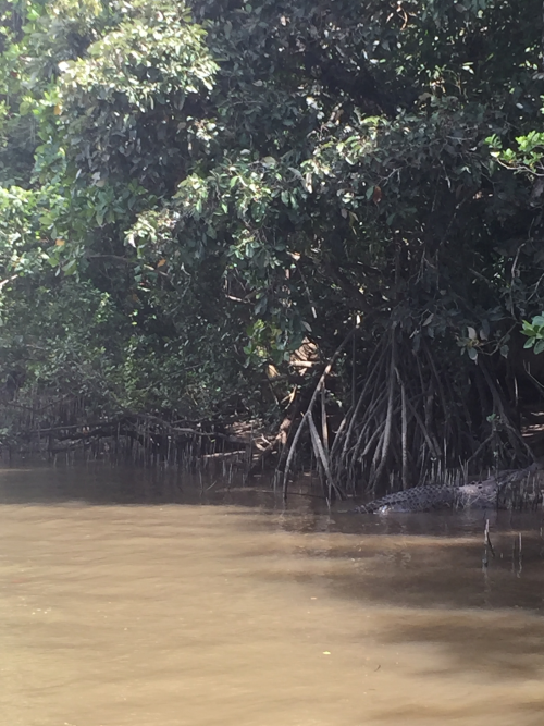 Daintree River March 2019 with croc